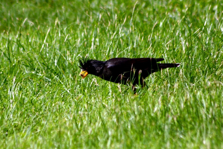 バンコクの野鳥