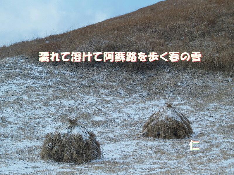 フォト575あそび『 濡れて溶けて阿蘇路を歩く春の雪 』zpw1301