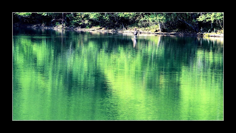 新緑と映り込み