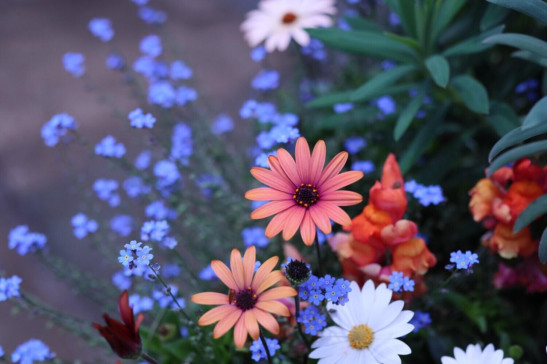 花につつまれて