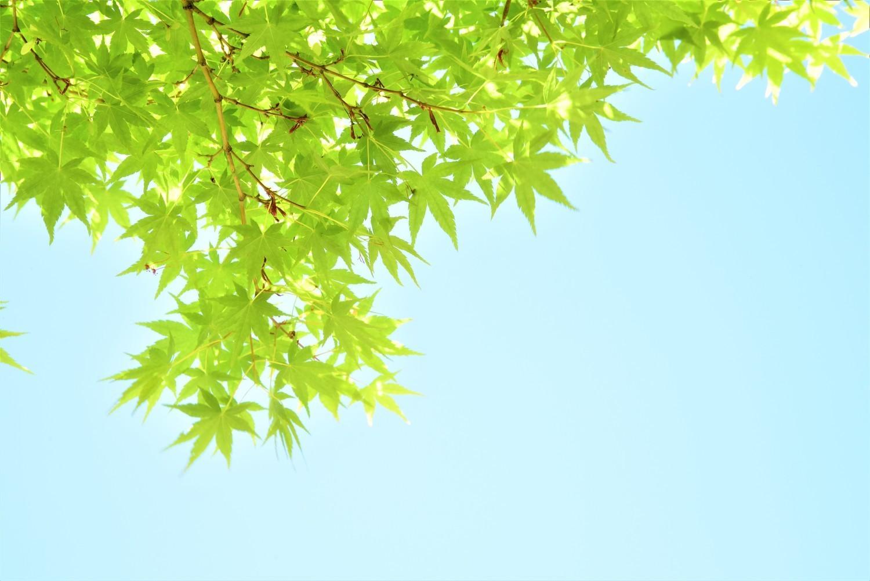 新緑まぶし