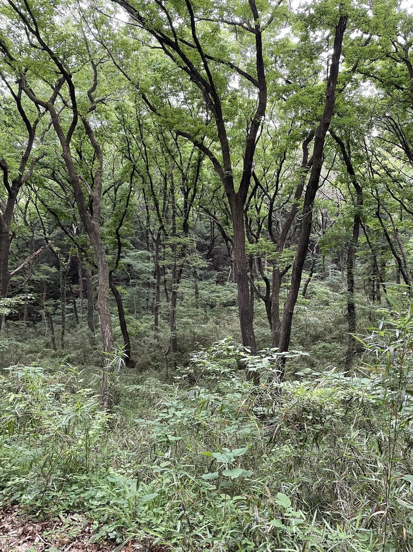 森林浴追加