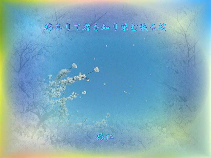 フォト575あそび『 縁ありて君を知り染む散る桜 』yvv0301