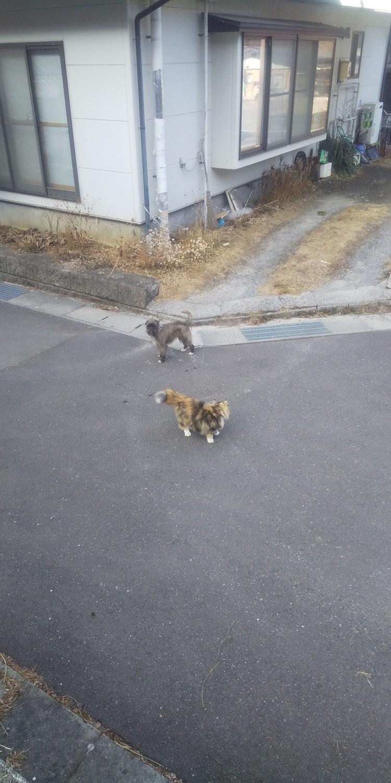 ナナとバニラの散歩