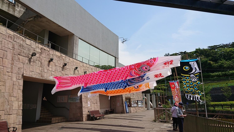 福岡県中央公園の緑と大型鯉のぼり(令和元年)