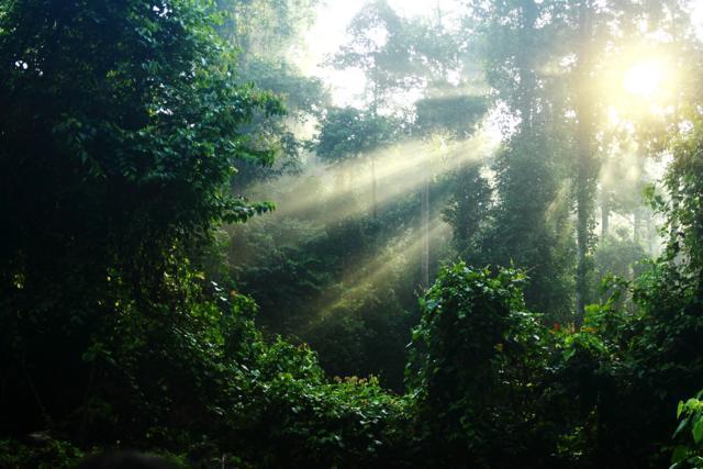 ジャングルの朝日